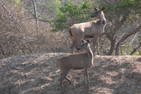 Bandipur Mar 14 262