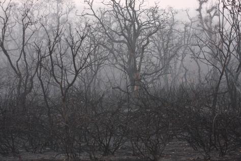 Bandipur Mar 14 327