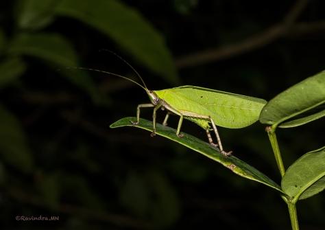 7_grasshopper