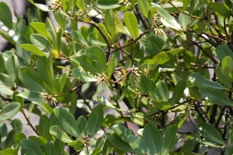 Kholsi flowers most honey prod
