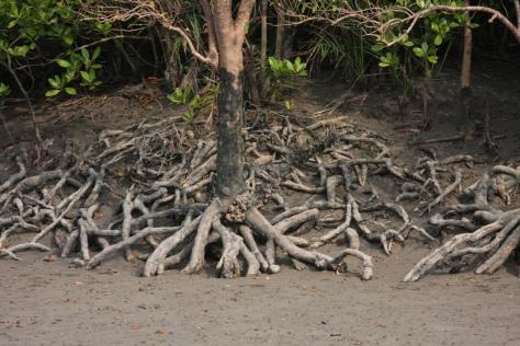 Snakelike roots